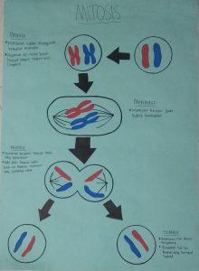 Pembelahan Sel Mitosis Kelompok 2 Kelas 9.7