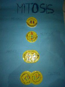 Pembelahan Mitosis Kelas 9.8 Kelompok 3